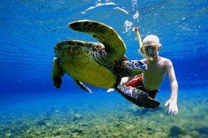 turtle_snorkel