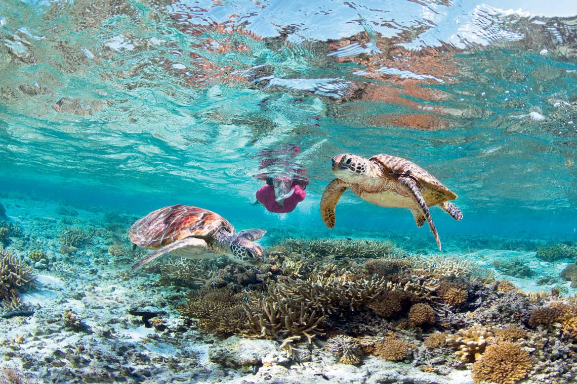 Great Barrier Reef Snorkeling on Opal Reef