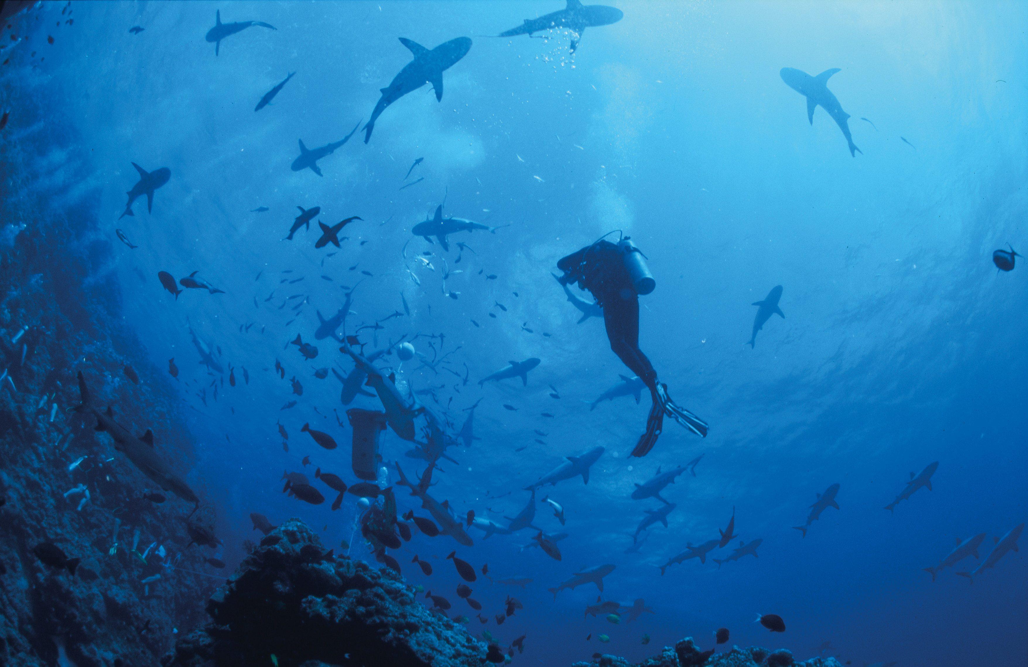 Great Barrier Reef Snorkeling on Osprey Reef