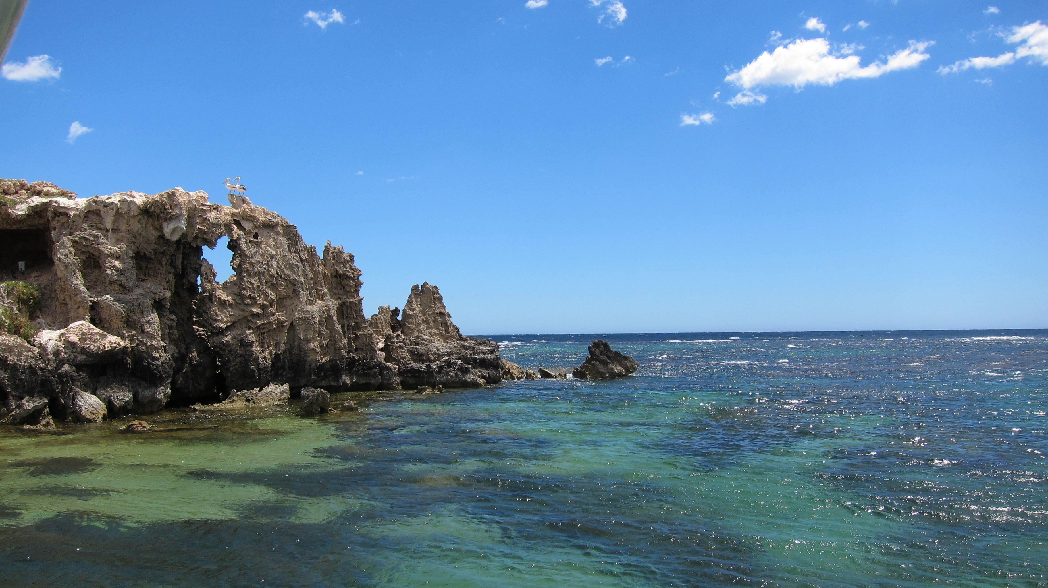Snorkeling Penguin Island Near Perth
